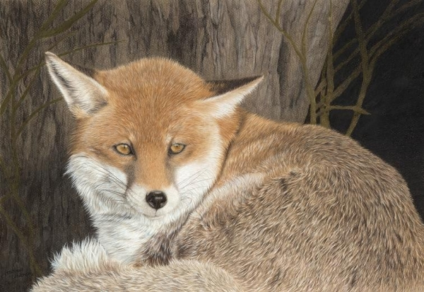 Young Fox by Frances Whitman